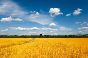 agricultural_land_ukraine